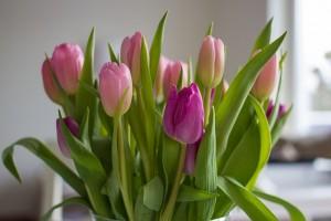 flowers-626591_640